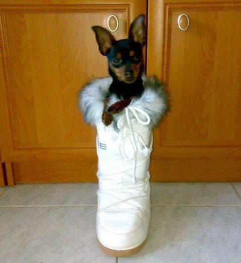 ...že by mi tá topánočka bola predsa len veľká ?