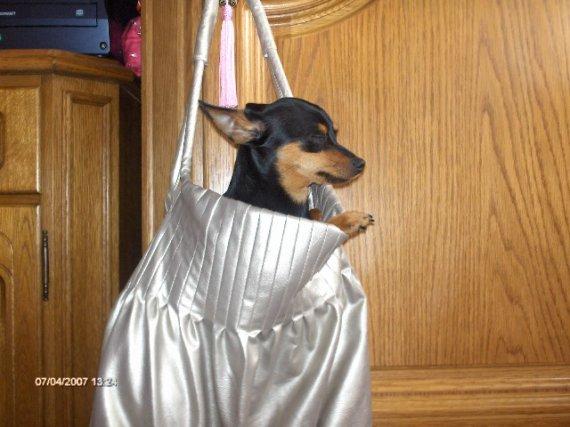 Kabelkový pes