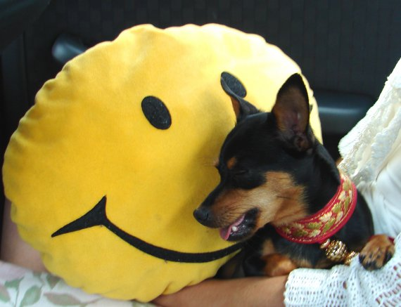 Borka-keep smile.