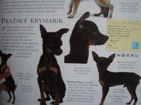 Podľa tohto obrázka si Janko vyberal psa...